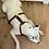 Thumbnail: Honden harnas
