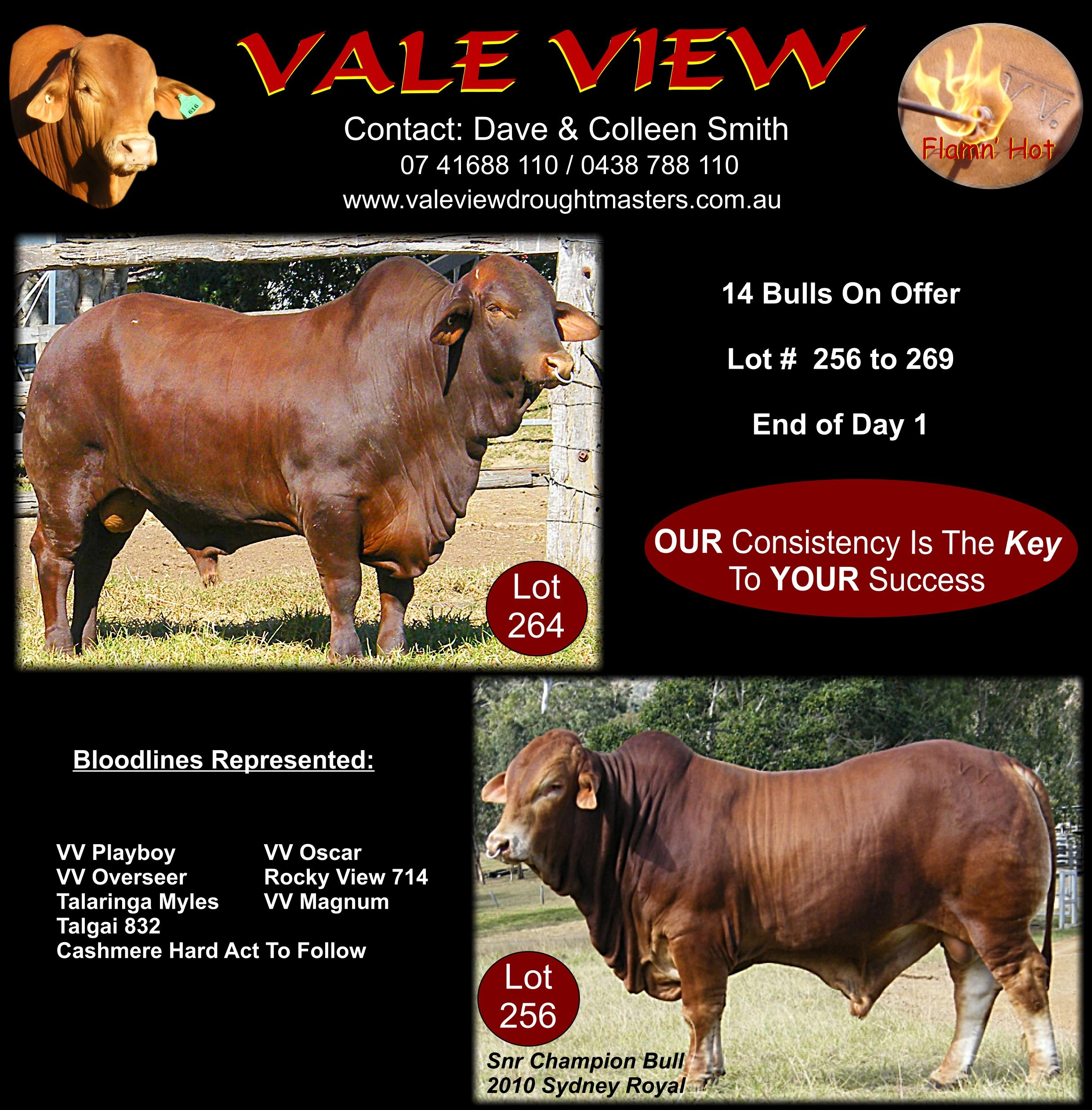 2010 DN sale catalogue