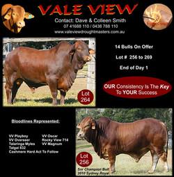 2010 DN sale catalogue