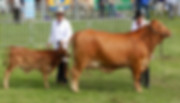 sequence grand champ gympie.jpg