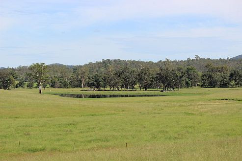 green grass and water 1 260115.jpg