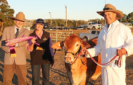 2016 VV Yang, Jnr Champion Female, Boonah Feature Show