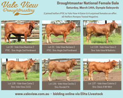 National Female Sale flyer