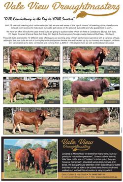 South Burnett bull preview