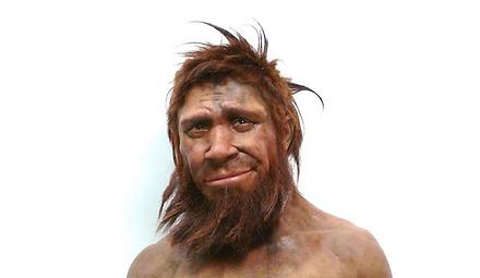 homo sapiens.PNG