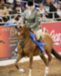 Mary Wilson Show Horse For Sale