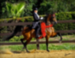 Mary Mag Wilson - Show Horse Trainer & Instructor