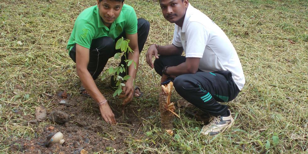 Plantation Phase I (BPUT Rourkela)