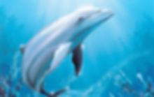 Airbrush Workshop Delfin bei Art Spot München