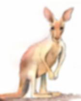 Känguru.png
