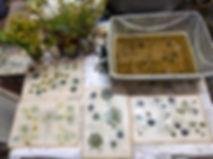 Eco dying_9713E 6x.jpg