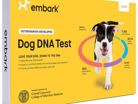 Dog DNA Test- Is it worth it?