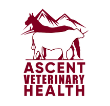 Ascent Veterinary Health_PNG.png