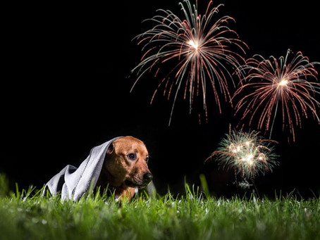 Keeping your dog calm during fireworks or thunder