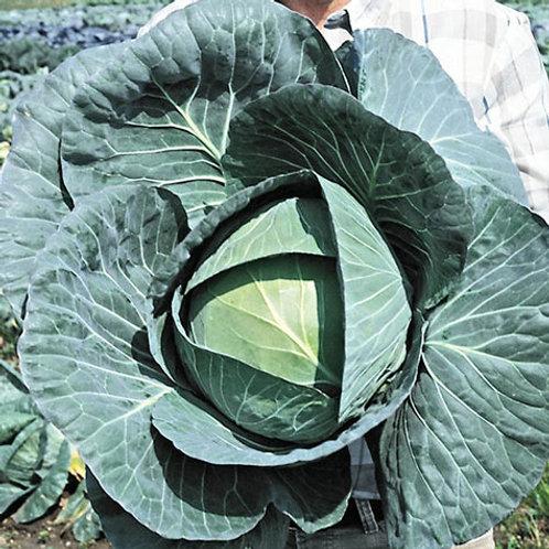 Cabbage Bravo