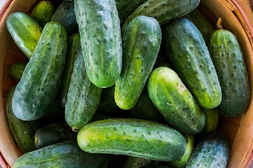 Cucumber Bush Crop