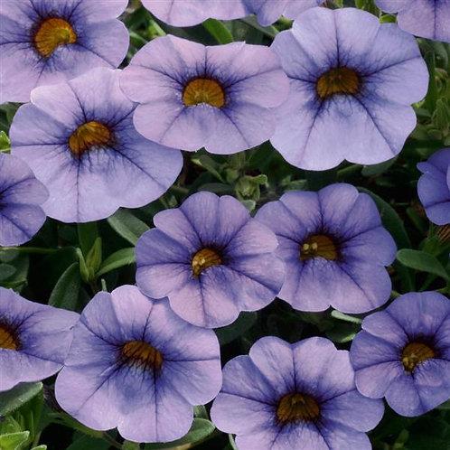 Calibrachoa Minifamous Neo Light Blue
