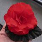 Begonia Non-Stop Mocca Scarlet