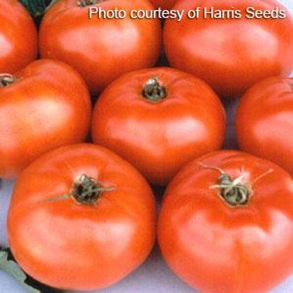 Tomato Jetstar