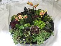 Echeverias,petites orchidées, mousse et ardoise
