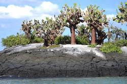 Kaktusbäume / Galapagos 2017