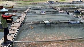 Ini Usul Pengusaha kepada Pemerintah Terkait SNI Pakan Ikan