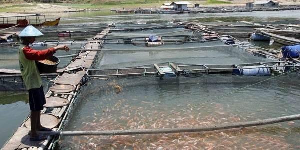 Cara Budiaya Ikan yang Baik