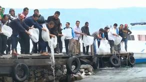Pemprovsu Tebar Puluhan Ribu Benih Ikan di Danau Toba