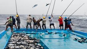 Ratusan Miliar Rupiah Sumber Daya Ikan Indonesia Diselamatkan KKP