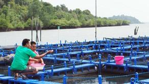 Disediakan 700 Hektare untuk Budidaya Ikan Laut di Bangka Belitung