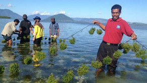 Lokasi Ideal Budidaya Rumput Laut