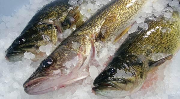 Ikan segar yang aman dikonsumsi