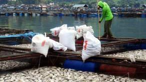 DO Meter Antisipasi Kematian Massal Ikan dan Udang