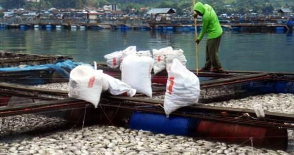 Kematian Massal Ikan