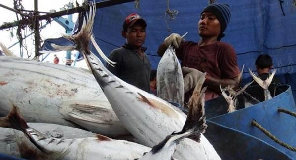 Perikanan Nusantara