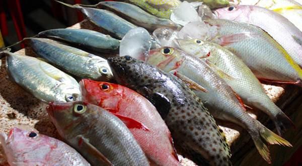 Festival Ikan Nusantara Muara Angke