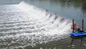 Tips Tentukan Jumlah dan Letak Kincir Air Tambak Udang