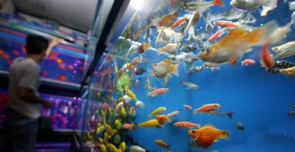industri ikan hias Indonesia