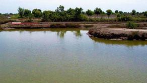 Alat untuk Mengukur Kadar Amonia dalam Air Tambak