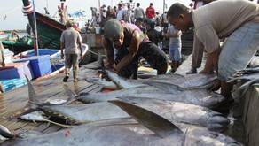 Tren Positif Investasi Sektor Perikanan di Indonesia