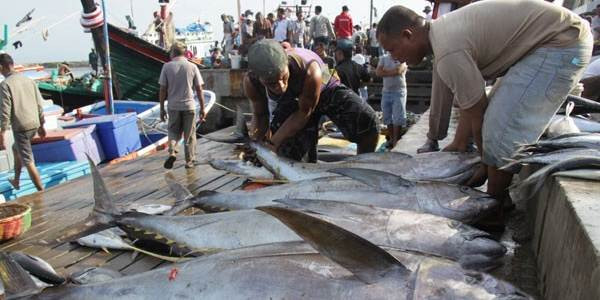 Ekspor Ikan Tuna