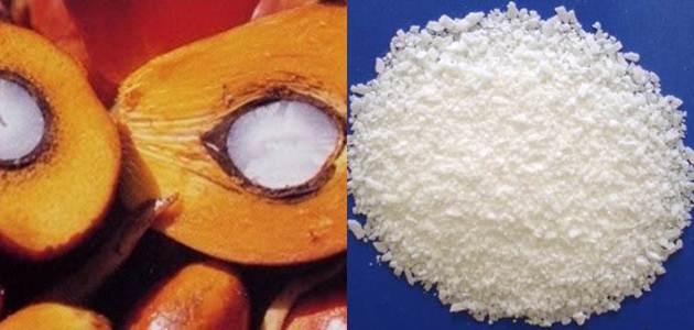 stearic acid hasil olahan kelapa sawit
