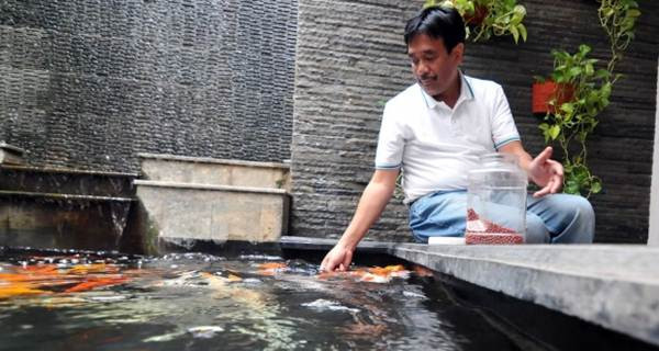 ikan koi Djarot Saiful Hidayat