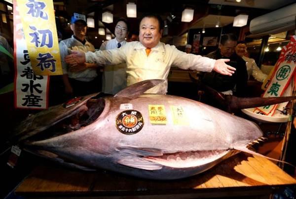 Ikan Termahal di Dunia
