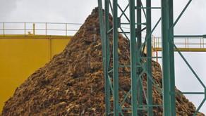 PLN dan PTPN Kerja Sama Memanfaatkan Limbah Sawit Jadi Sumber Energi Listrik