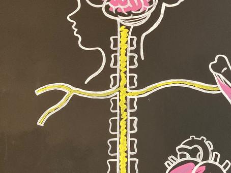 Una sesión de ajuste espinal mejora el control cardíaco.