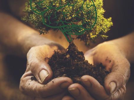 Cuida del árbol de tu vida, con la quiropráctica.