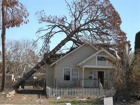 tree-damage_resized.webp