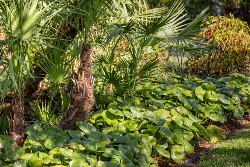 Garden Plants landscaping.jpg