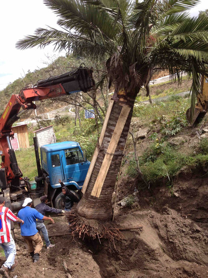 Caballo Campana Palm Installation